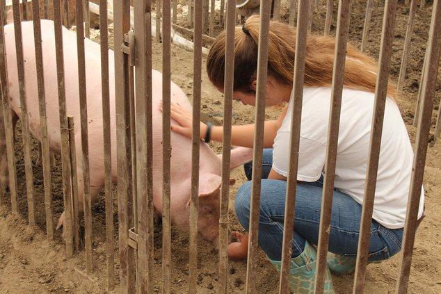 TUSD farm swine