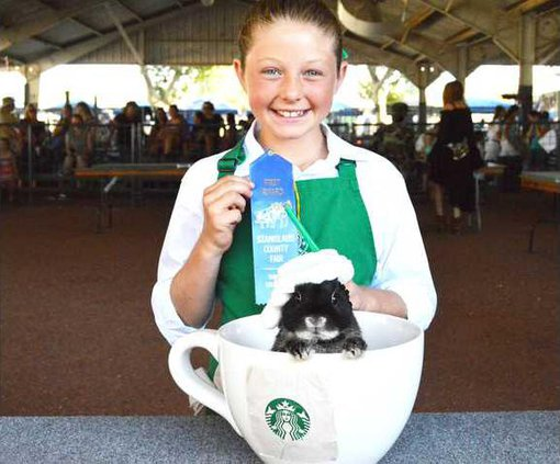 Fair kids and animals pic