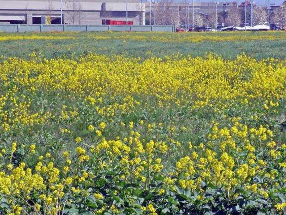 pic 209wildflowers2-LT