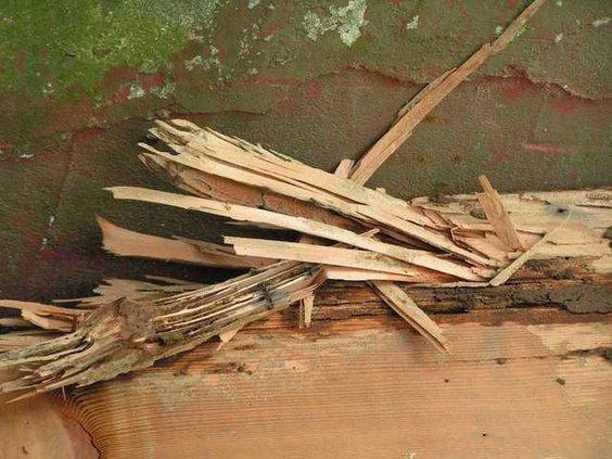termite-page-5 gs