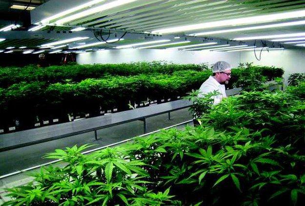 w2-marijuana-a-20140225