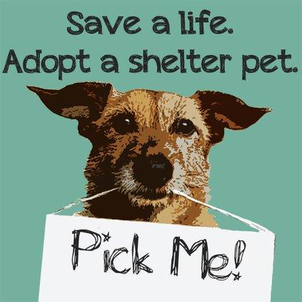 Shelter pet