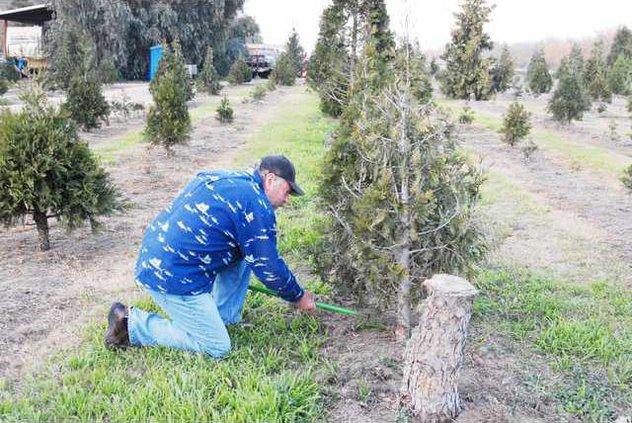 tree guy pic1