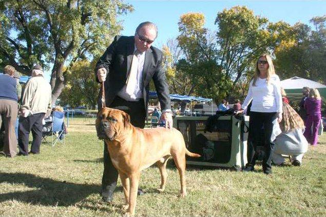 dog show pic1