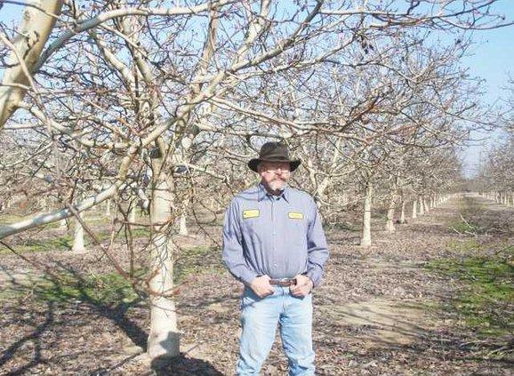 walnuts pic