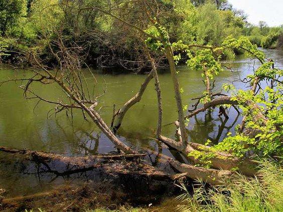 WATER RIVER RIPON3 3-30-15