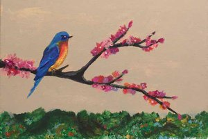 Bluebird Ashley Huh age 12