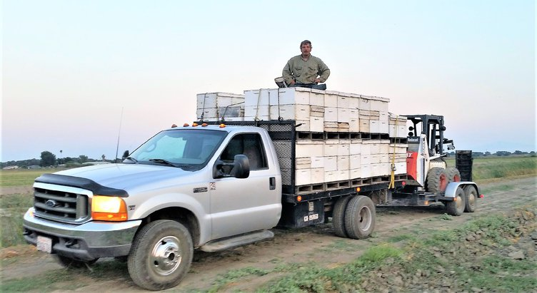 Eddie with truck and Bee boxes.jpg