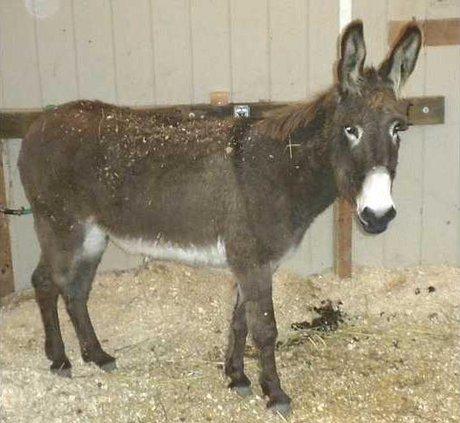 DonkeyDSCN1044