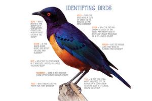 4641-birds.png