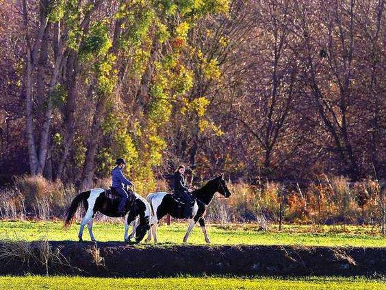 WILDART HORSES1-1-8-12