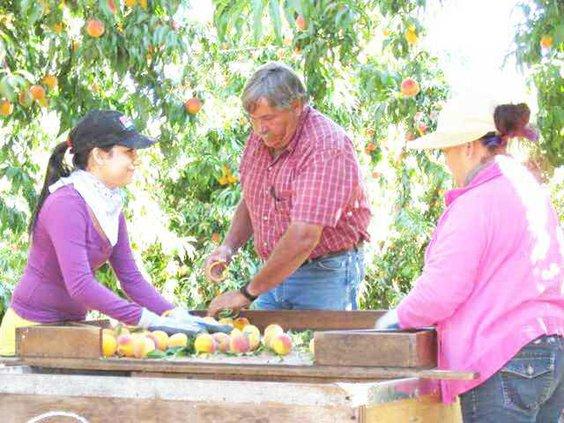 fruit farmer pic