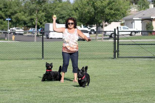swanson dog park pic