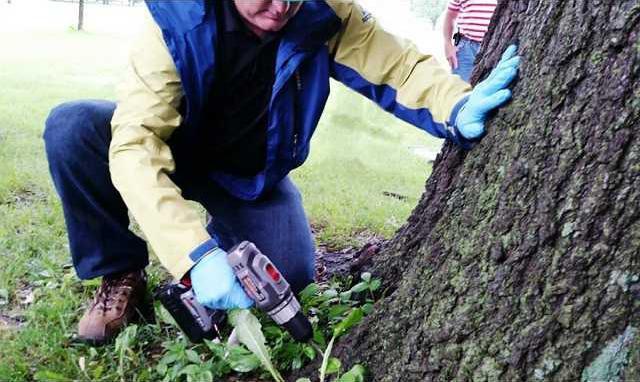 Tree Care pix