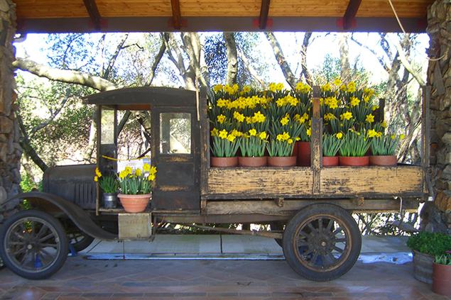 2910-daffodil.png