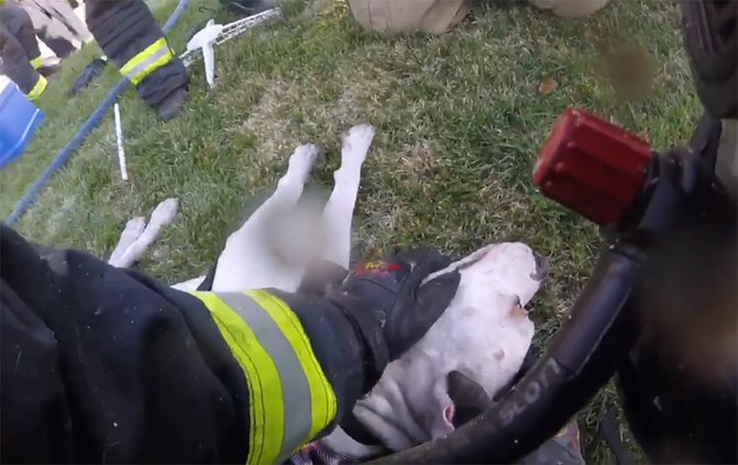 Turlock firefighters rescue dog