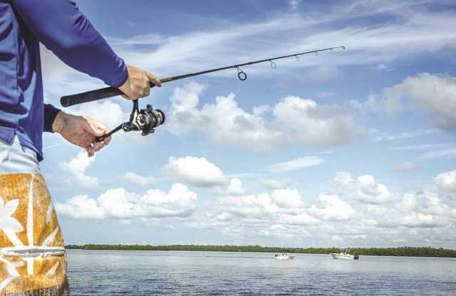 Fish Tips pix