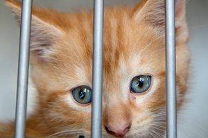 unwanted kitten