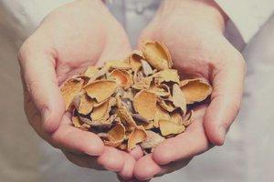 Almond industry