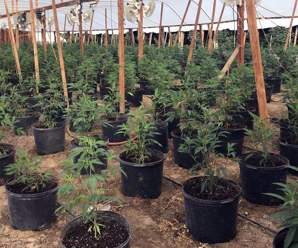 Pot green house Ceres
