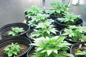 Pot plants ceres
