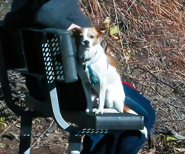 dog pix
